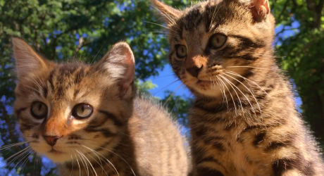 North campus 'pipe cat' darlings find a permanent home